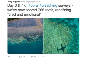 Real-time tweeting of Great Barrier Reef coral bleaching crisis